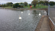 Princess Park Pond Eastbourne. - Events - Eastbourne - Sussex